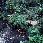 How to Use Slate Around a Pond Border