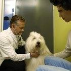 Tratamiento de efectos secundarios de prednisona en perros