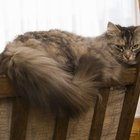 Homeopathic Treatments for Hairballs in Cats