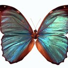 Como secar asas de borboletas