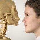Lección de ciencias para tercer grado: los huesos del cuerpo humano
