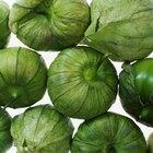 Cómo cultivar tomatillo verde