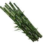 Cómo plantar semillas de bambú moso