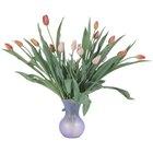 ¿Usar agua de hielo en el florero de los tulipanes ayudará a mantenerlas por más tiempo?