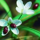 Las flores preferidas de una mariquita