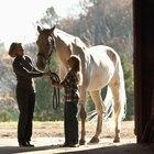 Como fazer com que meu cavalo pare de tentar me dar coices?