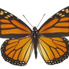 Two Disadvantages of Complete Metamorphosis