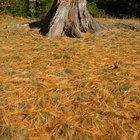 How to remove a rotting tree stump