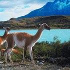Animals & Plants of Patagonia