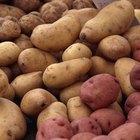 Como plantar cascas de batata