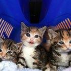 Receta de fórmula casera para gatitos fácil de preparar