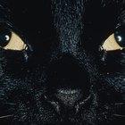 Eye Disorders in Cats