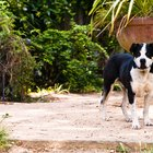 How to Keep Stray Dogs From Pooping in the Yard