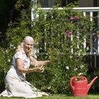 How to Grow Griffonia Simplicifolia