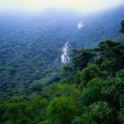 The physical characteristics of Amazon rainforests