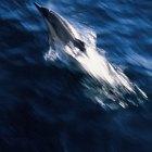 Delfines comunes en el Mar Mediterráneo