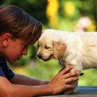 Broncopneumonia em cães