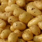 Do Potatoes Have Gluten in Them?