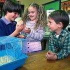 ¿Qué puedes poner en la jaula de un hamster para que sirva como lecho?