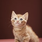 Antibiotics for Kittens & Their Effectiveness