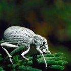 ¿Qué insectos viven en el desierto?
