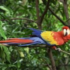 Aves y animales en el bosque tropical