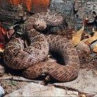 Acampar en Texas: Serpientes