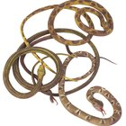 ¿Qué es un nido de serpientes?