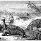 ¿Qué pueden comer las tortugas acuáticas y las terrestres?