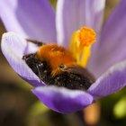 ¿Qué plantas producen polen?