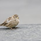 How to Clean Bird Droppings Off of Fabric