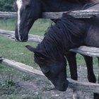 Remédios caseiros para um cavalo doente