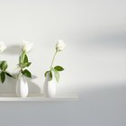 Con qué frecuencia debería cambiar el agua para mis rosas