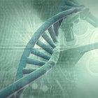 Vantagens e desvantagens do teste genético para pais