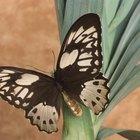 Tips para crear un jardín que atraiga aves y mariposas