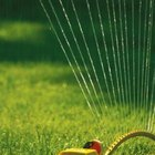 Lawns need water to maintain healthy growth.