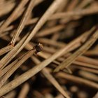 Is there an outdoor vacuum for pine needles?