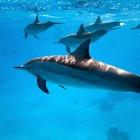 Diferencias entre animales de tierra y de mar