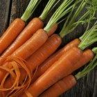 Listado de raíces comestibles