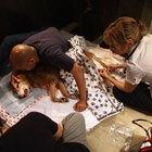 Cómo hacer los arreglos para la eutanasia de tu perro