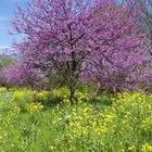 Árvores com flores lilás e roxas