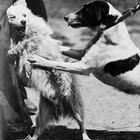 Dog Behavior & Social Aggression