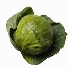 Fresh green cabbage on a wooden table