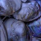 Como saber se ostras frescas estão estragadas