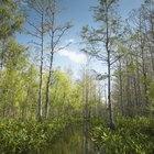 Acampando primitivamente en Florida