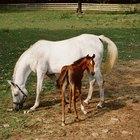 Como interromper diarreia em cavalos
