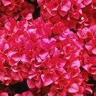 Como fazer conservantes para flores em casa