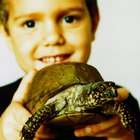 Quais animais podem viver no mesmo tanque de tartarugas?