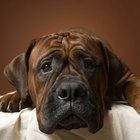 What Causes Trembling & Fatigue in Dogs?