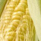 Creamed corn in white bowl